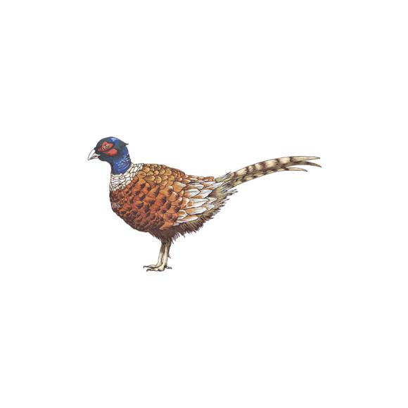Birds Vector 10 1 5