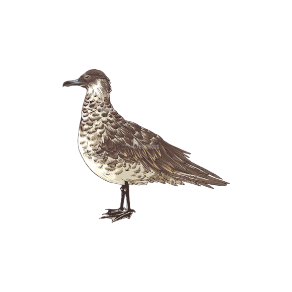 Birds Vector 10 4 5