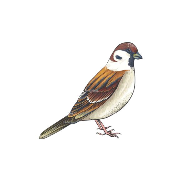 Birds Vector 12 1 birds vector 12 1 preview