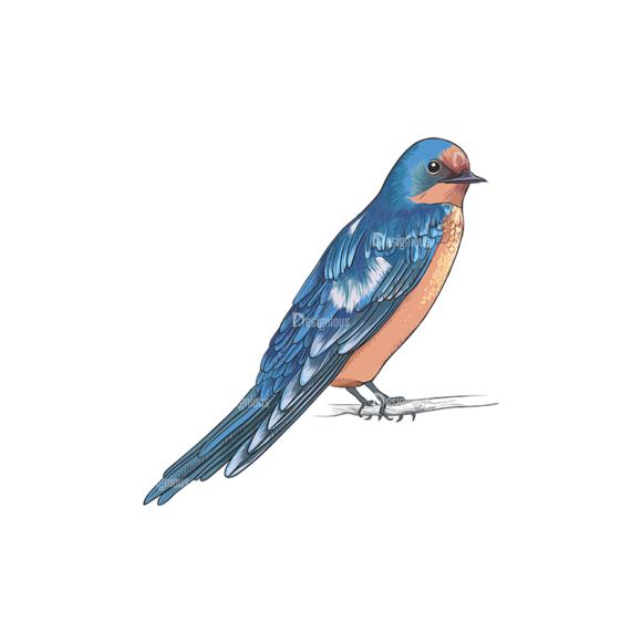 Birds Vector 12 2 5