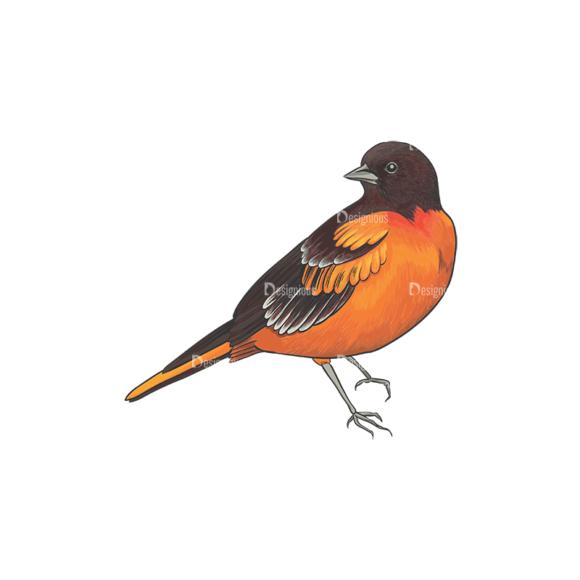 Birds Vector 12 3 birds vector 12 3 preview