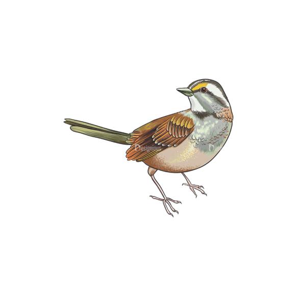 Birds Vector 12 6 birds vector 12 6 preview