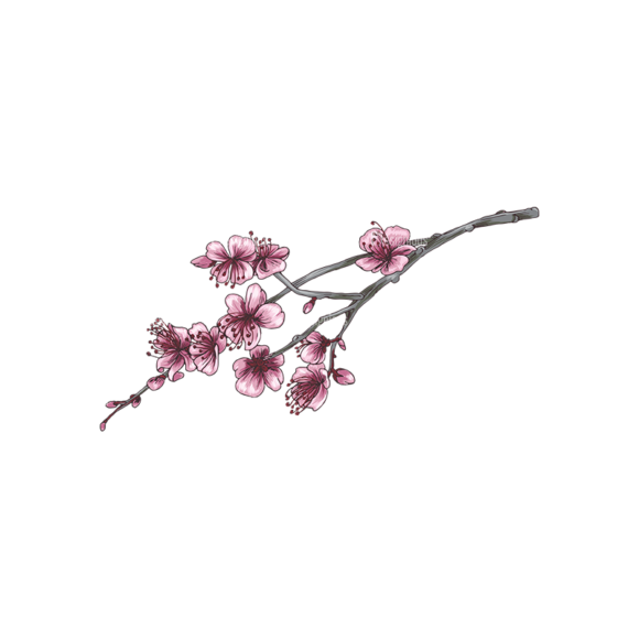 Blossomed Branches Vector 1 2 blossomed branches vector 1 2 preview