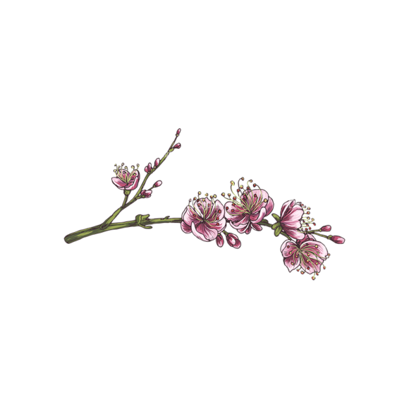 Blossomed Branches Vector 1 6 5