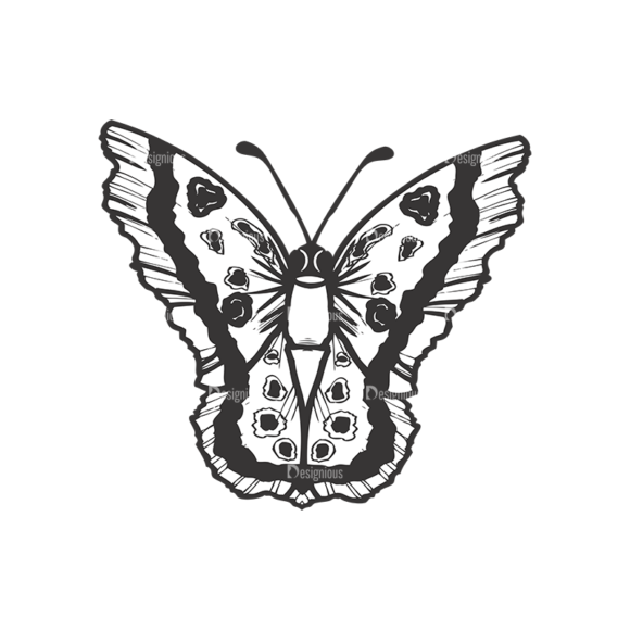 Butterflies Vector 1 2 5