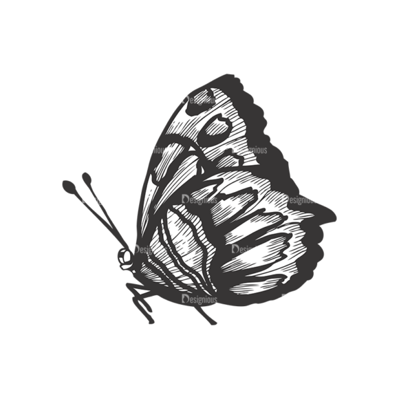 Butterflies Vector 1 3 5