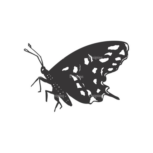 Butterflies Vector 1 5 5
