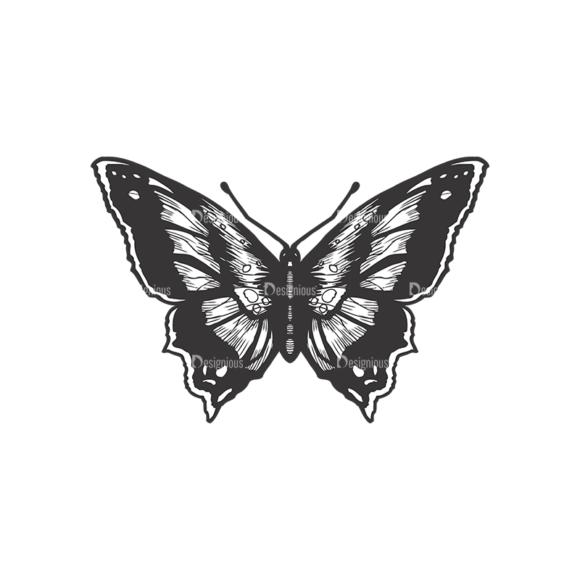Butterflies Vector 1 6 5