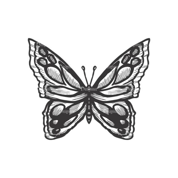 Butterflies Vector 1 7 butterflies vector 1 7 preview