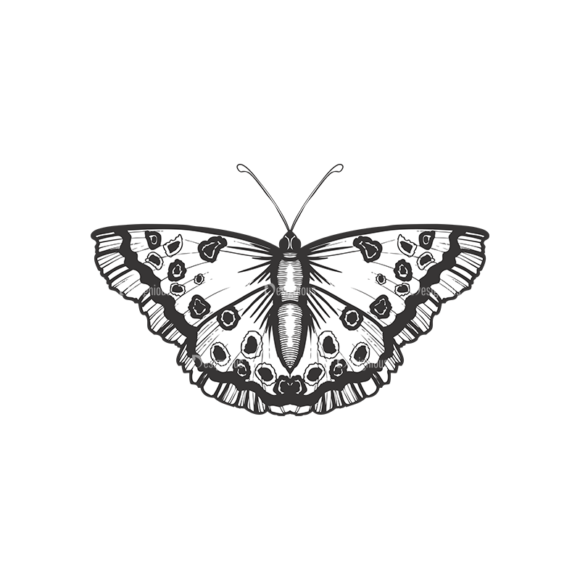 Butterflies Vector 1 9 butterflies vector 1 9 preview