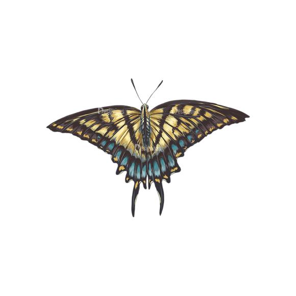 Butterflies Vector 5 3 1