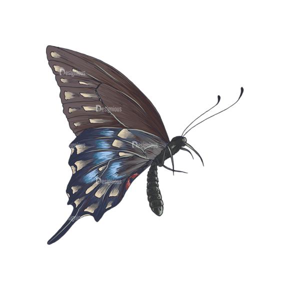 Butterflies Vector 5 4 1