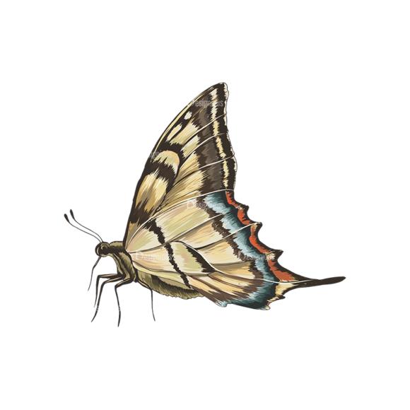 Butterflies Vector 5 5 1