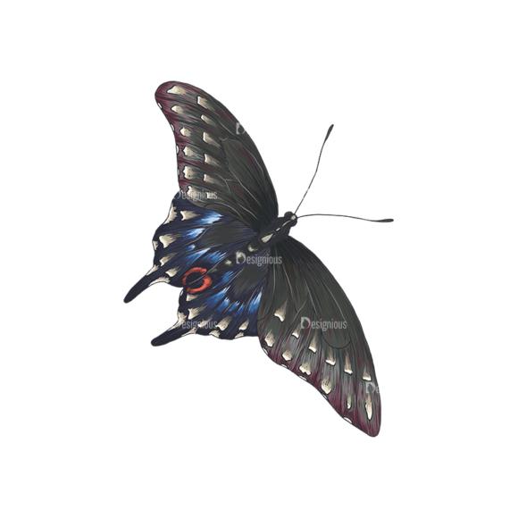 Butterflies Vector 5 6 1