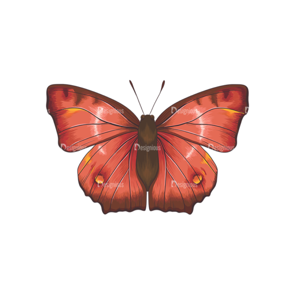 Butterflies Vector 6 1 1