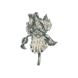 Decorative Flowers Vector Flower 03 Clip Art - SVG & PNG vector