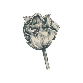 Decorative Flowers Vector Flower 06 Clip Art - SVG & PNG vector