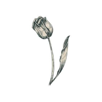 Decorative Flowers Vector Flower 09 Clip Art - SVG & PNG vector