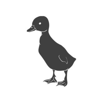 Domestic Animals Vintage Vector 3 Vector Duck 08 Clip Art - SVG & PNG vector