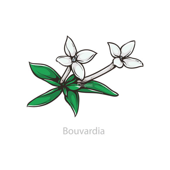 Floral Vector 109 2 5