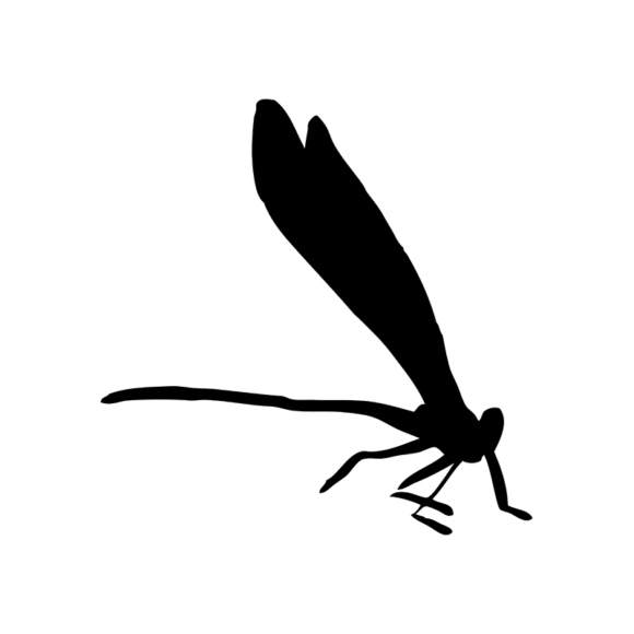 Insects 6 Vector Dragonfly 05 1
