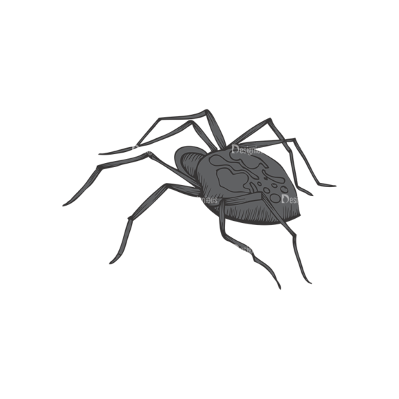 Insects Vector 1 1 1
