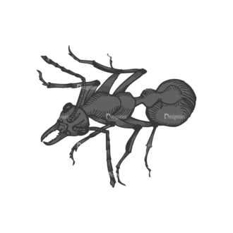 Insects Vector 1 10 Clip Art - SVG & PNG vector