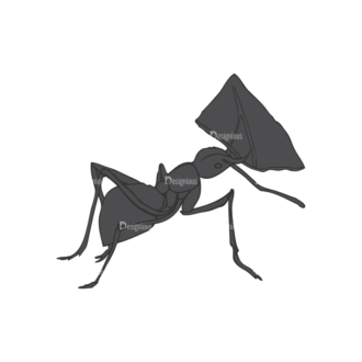 Insects Vector 1 13 Clip Art - SVG & PNG vector