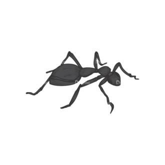Insects Vector 1 14 Clip Art - SVG & PNG vector