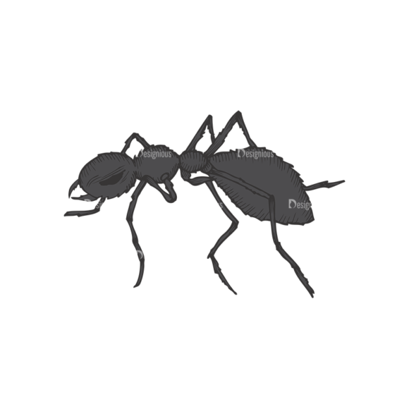 Insects Vector 1 16 insects vector 1 16 preview