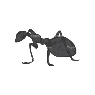 Insects Vector 1 17 Clip Art - SVG & PNG vector