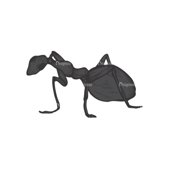 Insects Vector 1 17 1