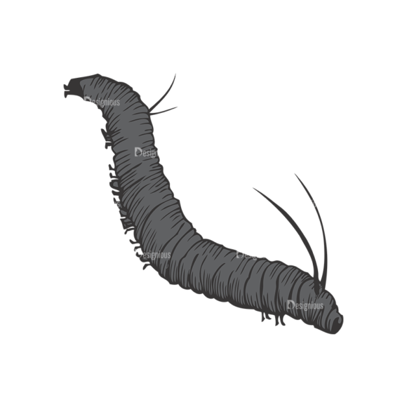 Insects Vector 1 2 1
