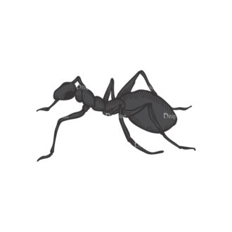 Insects Vector 1 20 Clip Art - SVG & PNG vector