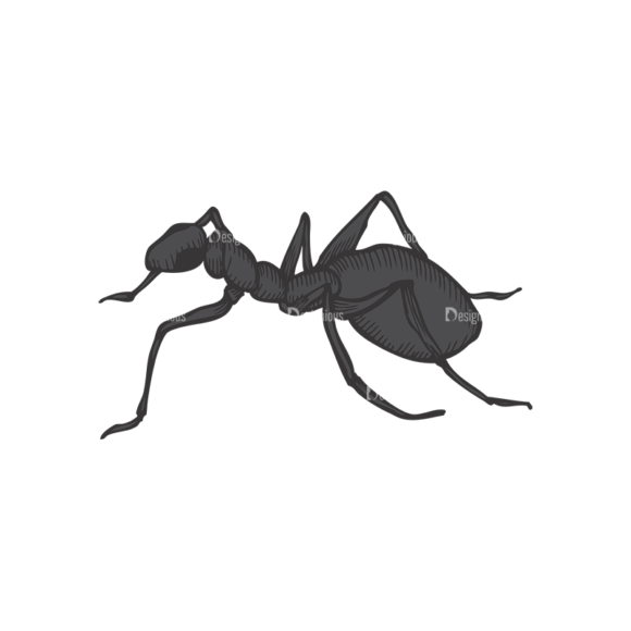 Insects Vector 1 20 insects vector 1 20 preview