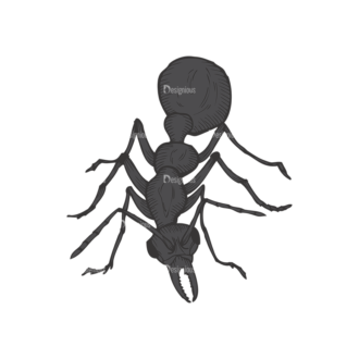 Insects Vector 1 21 Clip Art - SVG & PNG vector