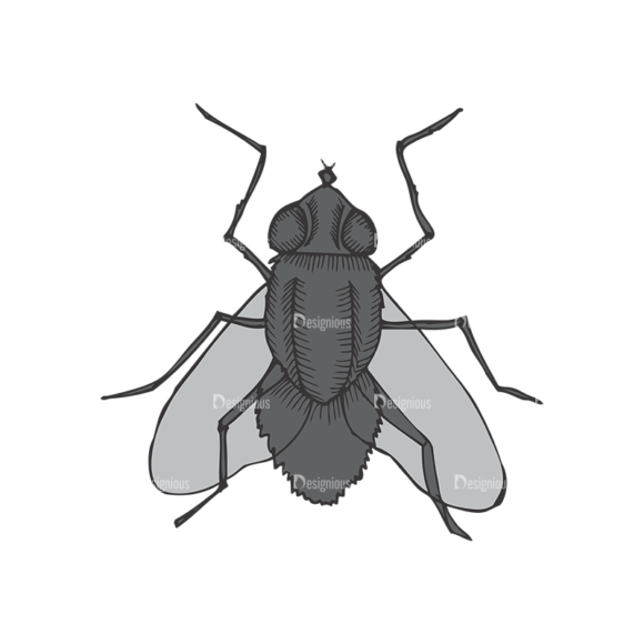 Insects Vector 1 4 1
