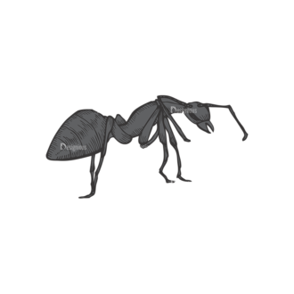 Insects Vector 1 5 Clip Art - SVG & PNG vector