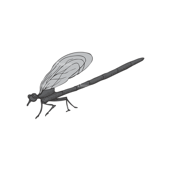 Insects Vector 1 6 1
