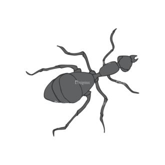 Insects Vector 1 8 Clip Art - SVG & PNG vector