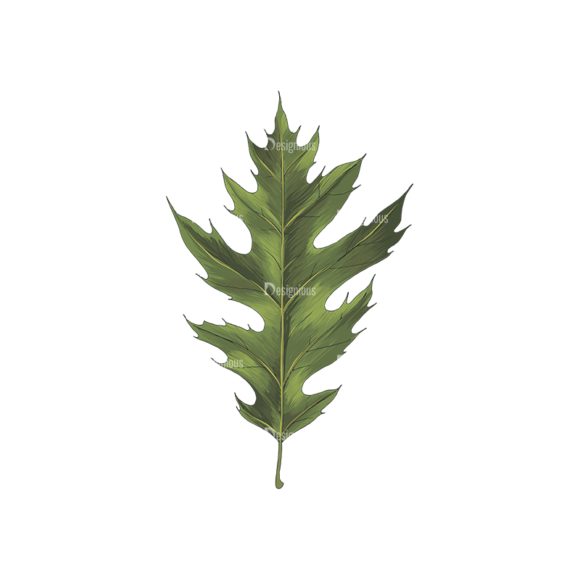Leaves Vector 2 1 leaves vector 2 1 preview