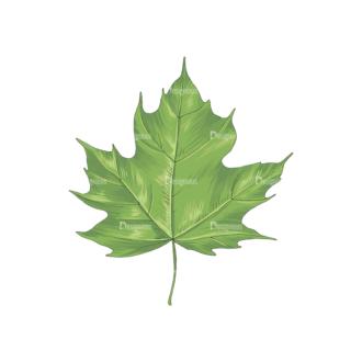 Leaves Vector 2 6 Clip Art - SVG & PNG vector