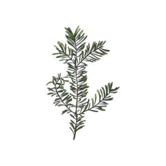Leaves Vector 2 7 Clip Art - SVG & PNG vector