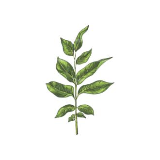 Leaves Vector 2 9 Clip Art - SVG & PNG vector