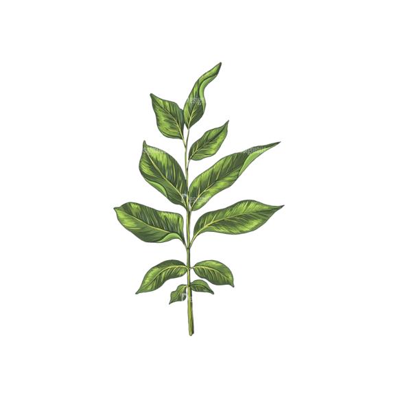 Leaves Vector 2 9 1
