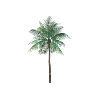 Palm Trees Vector 2 2 Clip Art - SVG & PNG palm