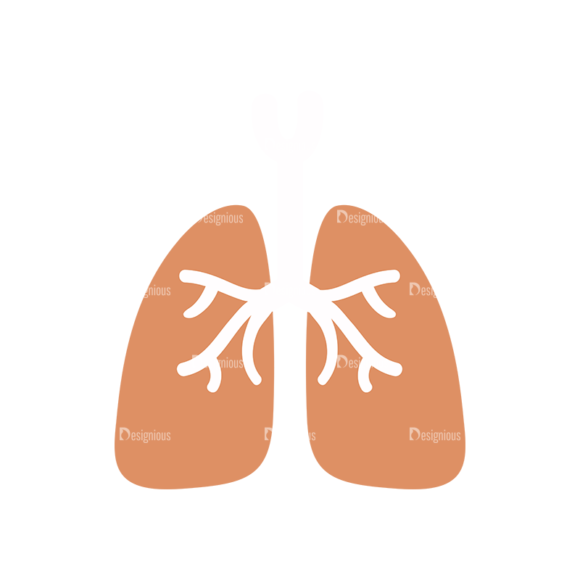 Physician Vector Lungs 1