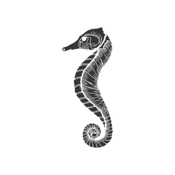 Sea Creatures Vector 1 24 5