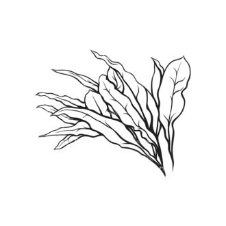 Tropical Plants Vector 1 1 Clip Art - SVG & PNG tropical