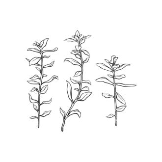 Tropical Plants Vector 1 3 Clip Art - SVG & PNG tropical